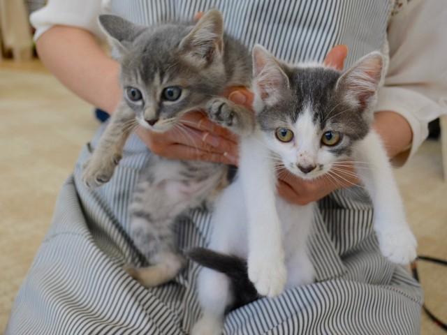 生後2~3週間の子猫たちが飼い主を待っている