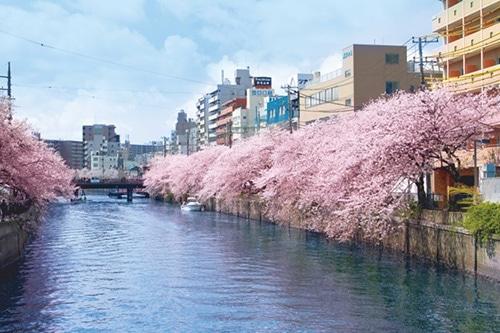 京急電鉄とリザーブドクルーズが「春の横浜 大岡川クルーズ」 横浜都心部水上交通社会実験