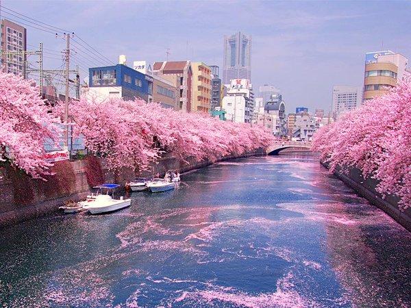 大岡川沿いの桜。露店は4月9日まで出店する