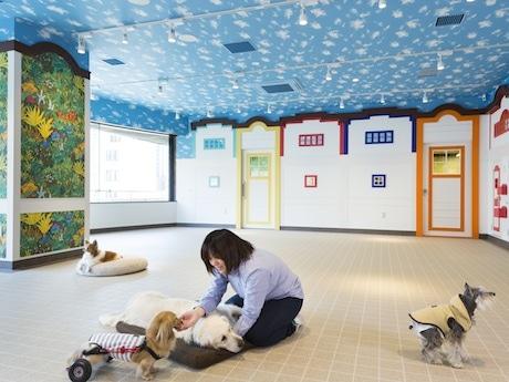 診療室を併設した「介護・老犬ケア」