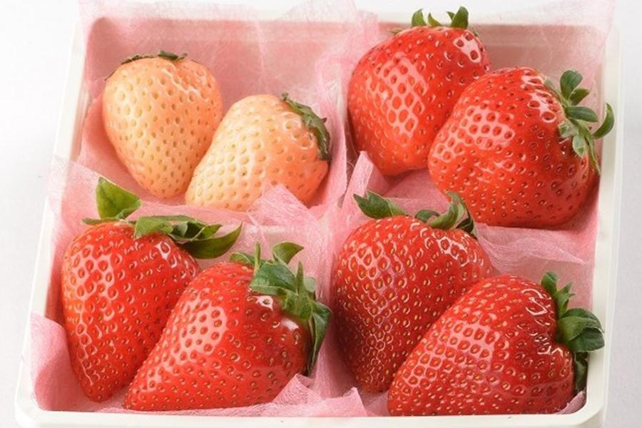 いちごマーケットで販売中の横浜水産「4種食べ比べセット」