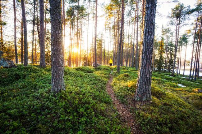 フィンランドの森(写真=Michael Matti, Visit Finland)