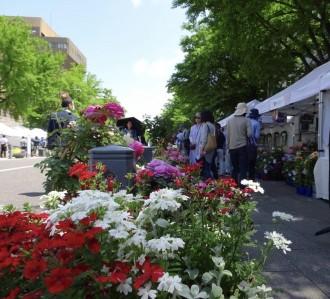 横浜の秋のバラを楽しむ「ローズ&ガーデンマーケット」 日本大通りのイベント再開