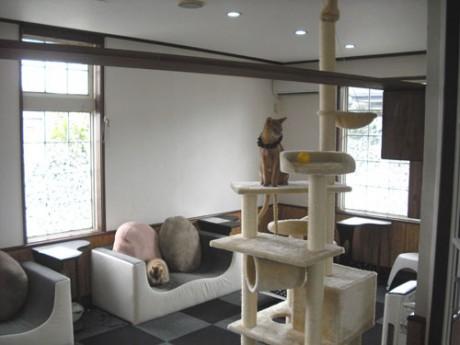 猫が自由に遊び回る店内