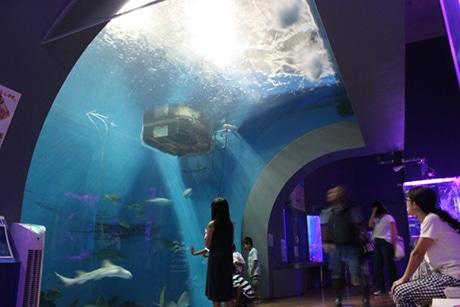 エイやサメが活発に動く夜の大水槽
