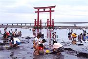 浜名湖潮干狩りが3年ぶりに再開 予約開始3日で5月の日程9割埋まる