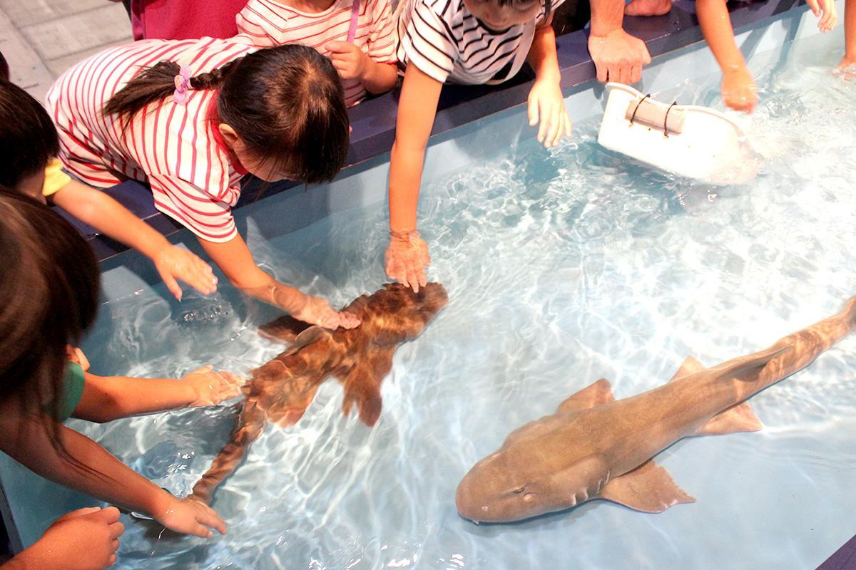 サメを触る子どもたち