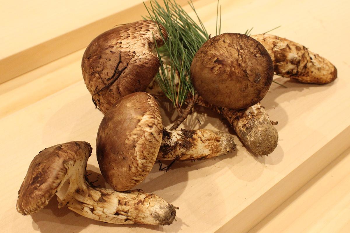 自らが採った松茸を土瓶蒸しや炊き込みご飯で提供