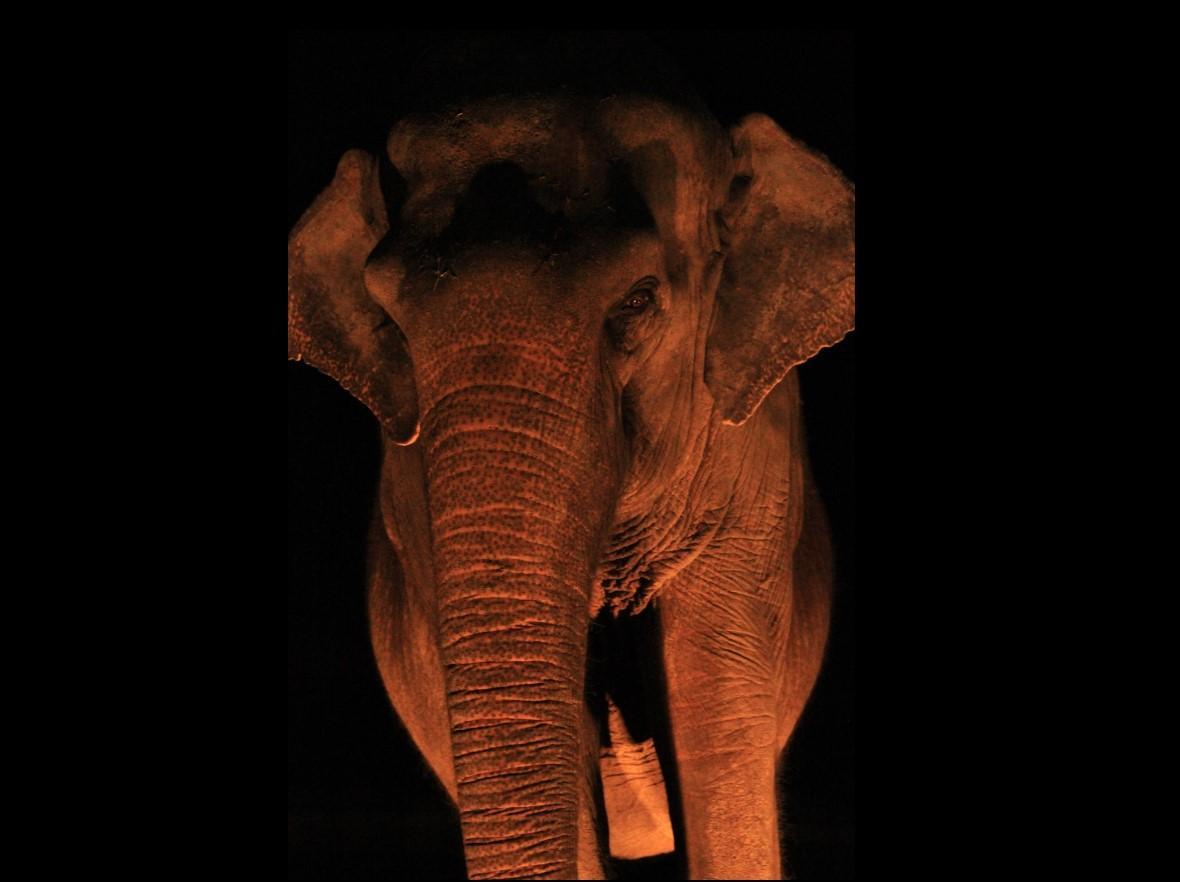 夜間の動物たちの姿を見学できるナイトズー