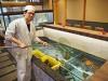 浜松・舞阪町の活魚料理店リニューアル 3.5メートルのいけすを配置