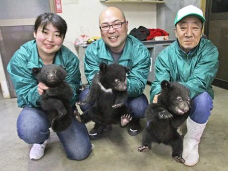 一般公開される3頭の赤ちゃんんクマ