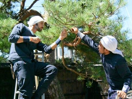 庭師初挑戦のドゥビル・フローレントさん(左)とマツ枝の剪定を指導する庭師の林賢司さん(右)