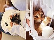 猫専用ポケット付き「にゃんガルーパーカー」、累計2万枚販売で写真集出版