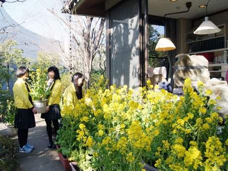 司馬遼太郎さんの書斎の前に菜の花を設置