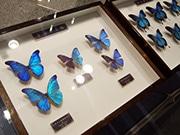 大阪府立中央図書館で春季企画展示 自然科学テーマに博物館と連携