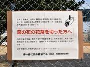 司馬遼太郎記念館周辺の菜の花、773本切られる 「二度としないで」、ポスター掲出