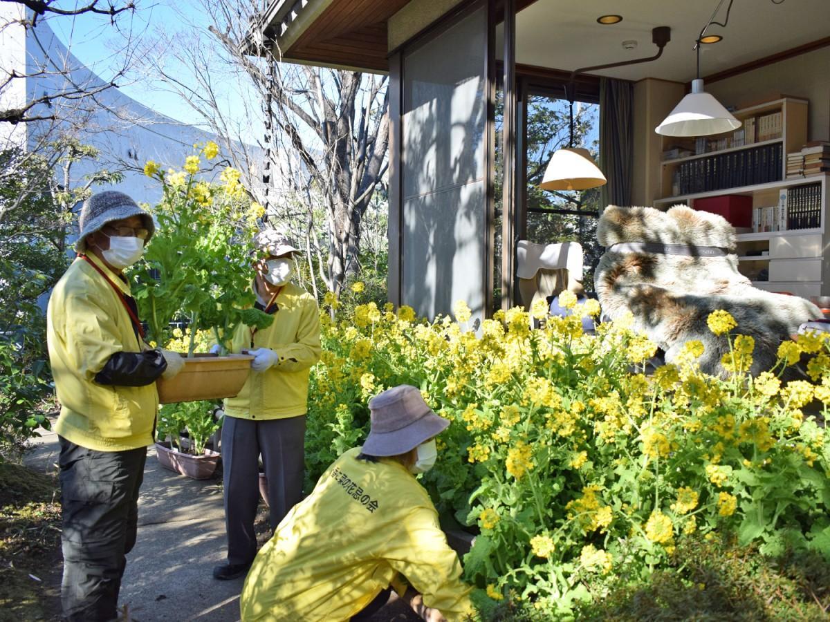 同館ボランティアスタッフが菜の花のプランターを設置