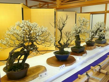 好古園「潮音斎」に展示する鎌尾さんの作品