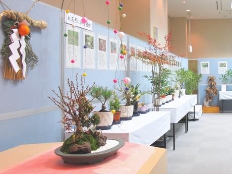 お正月に飾る植物や春の七草などを展示する「新春の植物展」