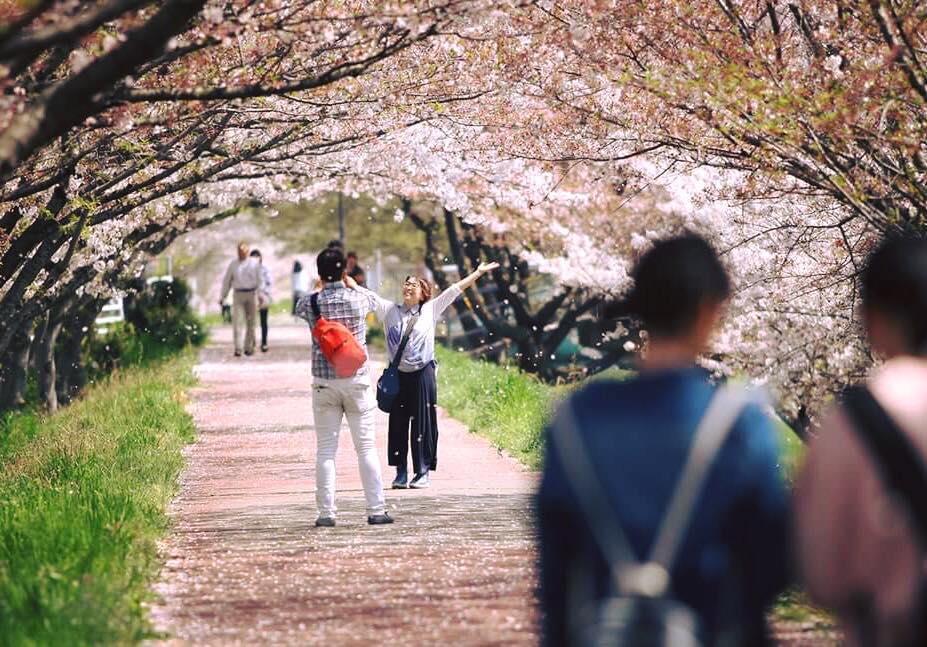 春の夢前川河川敷の様子