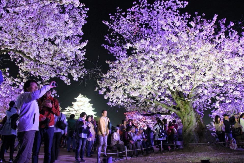 昨年の夜桜会の様子