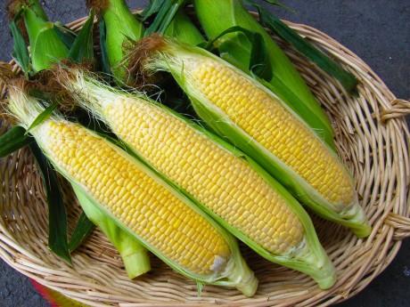 生でも食べられる甘さを持つトウモロコシ「嶽きみ」
