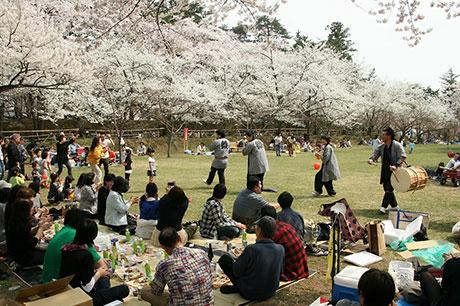 弘前ねぷたの笛演奏のサービスもあり、花見客には大好評