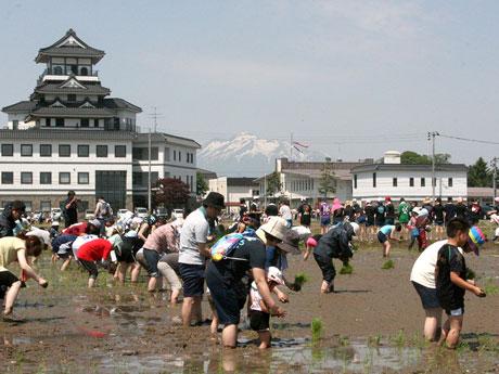 田舎館村の村役場と岩木山をバックに。1600人が田植え体験ツアーに参加