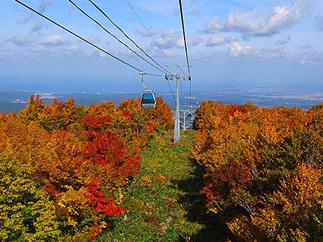 木々の色づきが標高差によって変化する岩木山。ゴンドラ中間から見える日本海と津軽平野