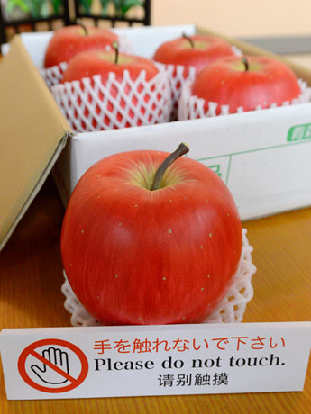 本物のリンゴと勘違いする人たちが多いという。どれも陶器製のリンゴ