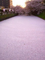 5万以上リツイートされた弘前公園の「花いかだ」が話題に 投稿者に聞く