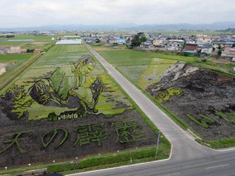 田舎館村展望台から見る第1田んぼアート「風と共に去りぬ」(6月23日撮影)