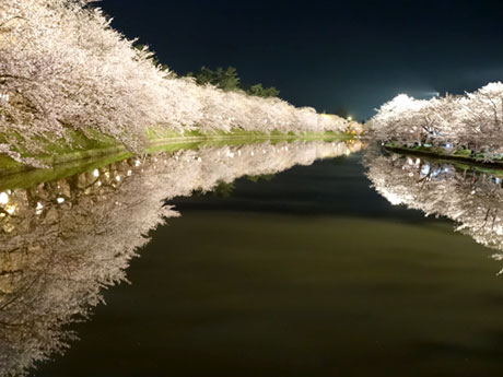 ヤフトピにも紹介された弘経2015年上半期ランキング1位の「逆さ桜」