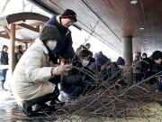 弘前公園で剪定した桜の枝配布 春を先取りに地元民ら200人