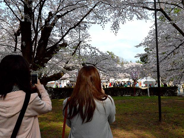 ハート型の桜の枝を携帯電話で撮影する花見客