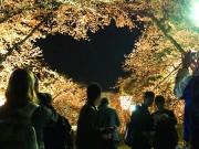弘前公園の隠れスポット「ハート型」 今年も花見客の人気に