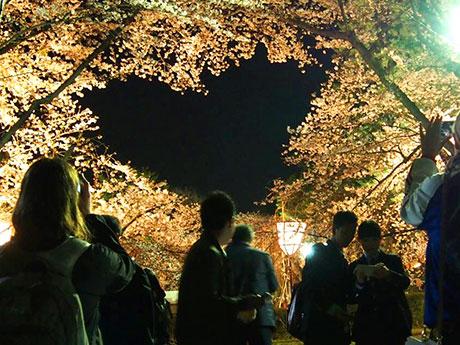ライトアップされたハート型の桜の木に集まる花見客