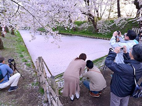 花筏にカメラやスマホを向ける花見客