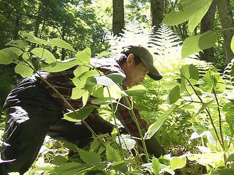 番組のワンシーン。山菜採りをする米澤昭也さん(写真提供:NHK)