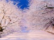 冬の弘前公園で「桜咲く」ライトアップ企画 地域おこし協力隊が呼び掛け