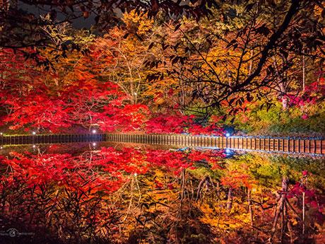 「妖しい」と話題を集めた弘前公園の紅葉のライトアップ(写真提供=成田理力さん)