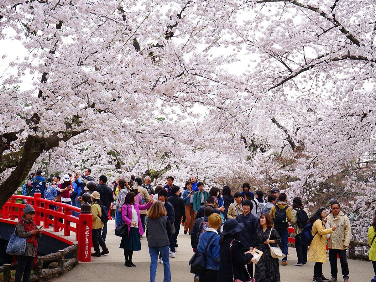 満開を宣言した下乗橋付近の桜
