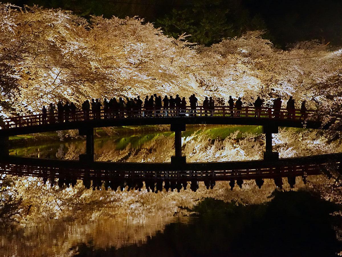 桜のライトアップと春陽橋