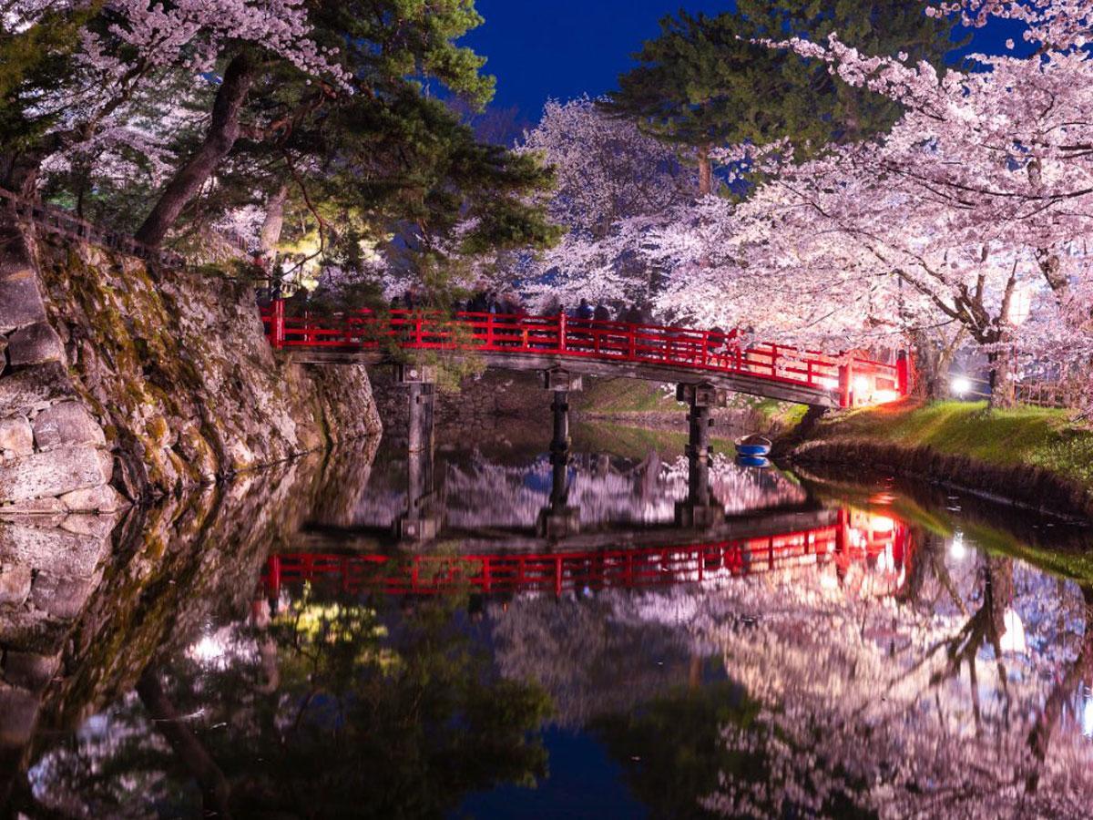kentaさんが投稿した弘前公園の桜(写真提供:kenta)