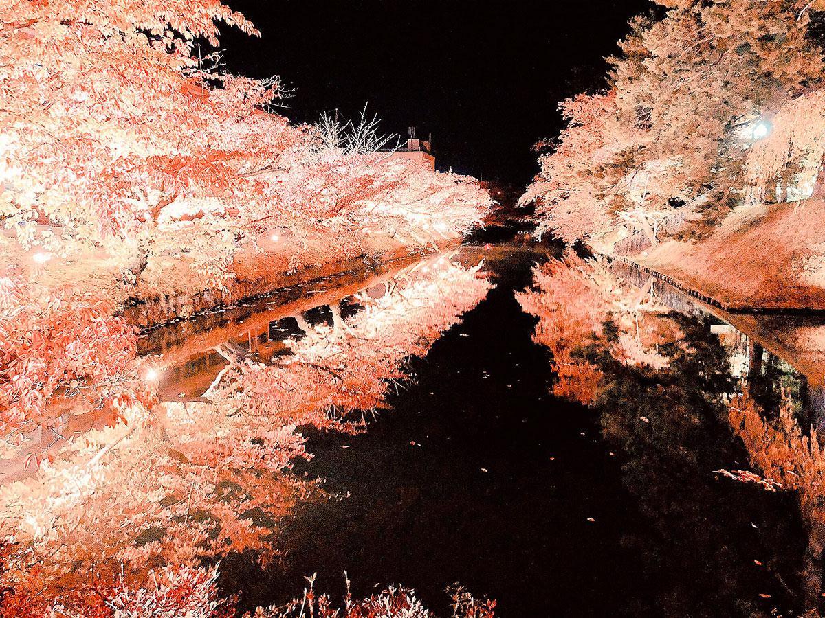 「エモい」と話題になった紅葉のライトアップ(写真提供=やわらか@softymedicalian)