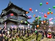 弘前さくらまつり開幕 園内の桜は咲き始め