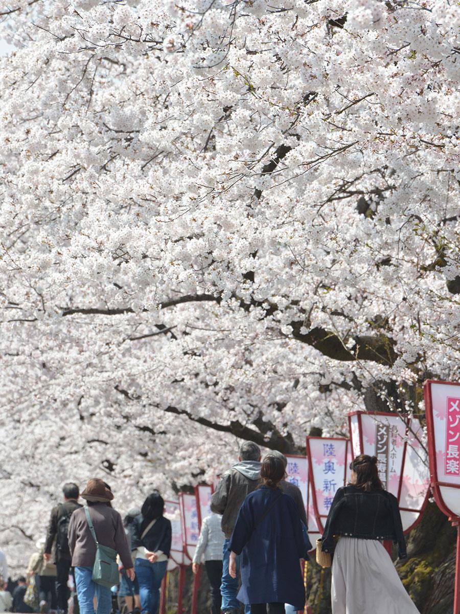 追手門近くの外堀の桜