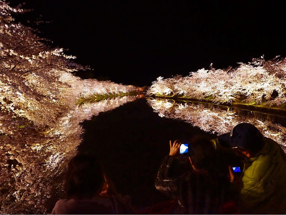 春陽橋から見る西堀のライトアップ。水面に桜が鏡のように映る