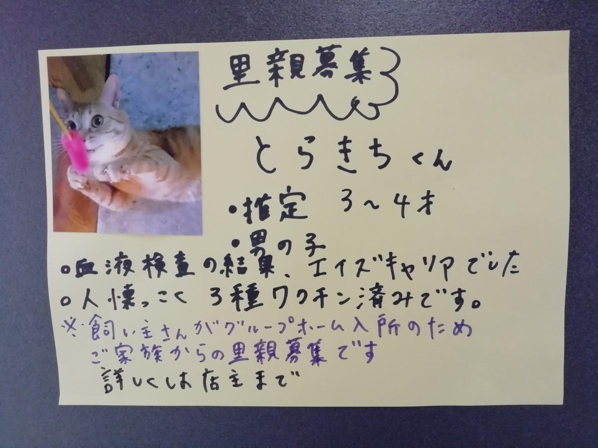 飼い主の入所などが原因で里親を待つ猫の張り紙