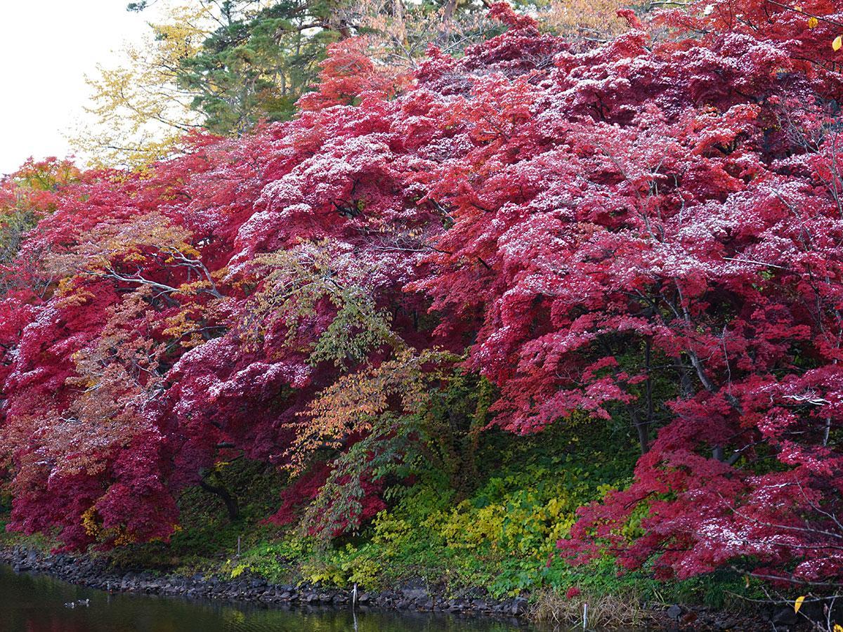 15日朝に撮影した弘前公園の紅葉と雪